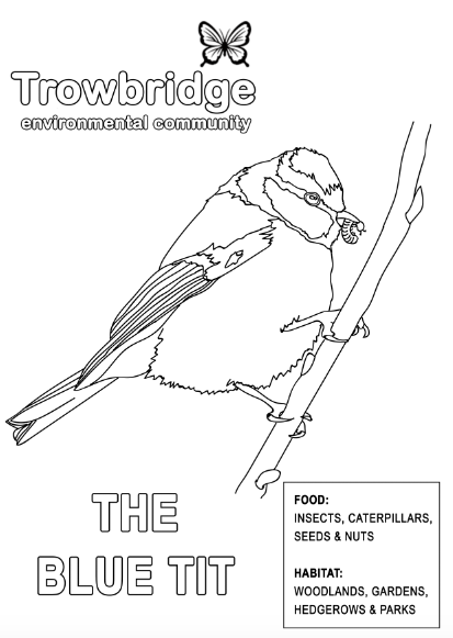 This image has an empty alt attribute; its file name is blue_tit_colouring_sheet.png